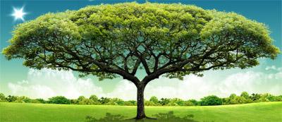 L'arbre Séphirotique de la Vie